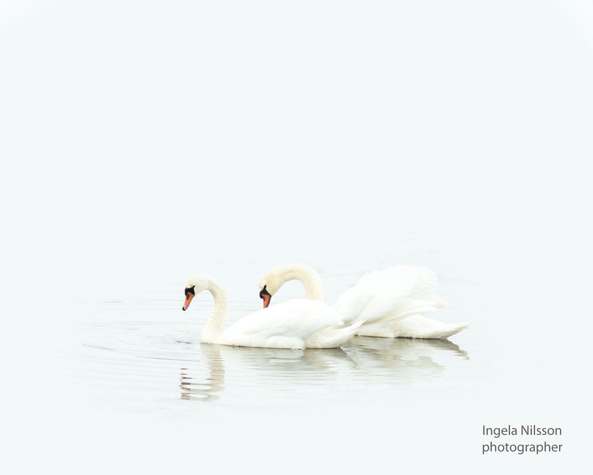 Svanar - We two -