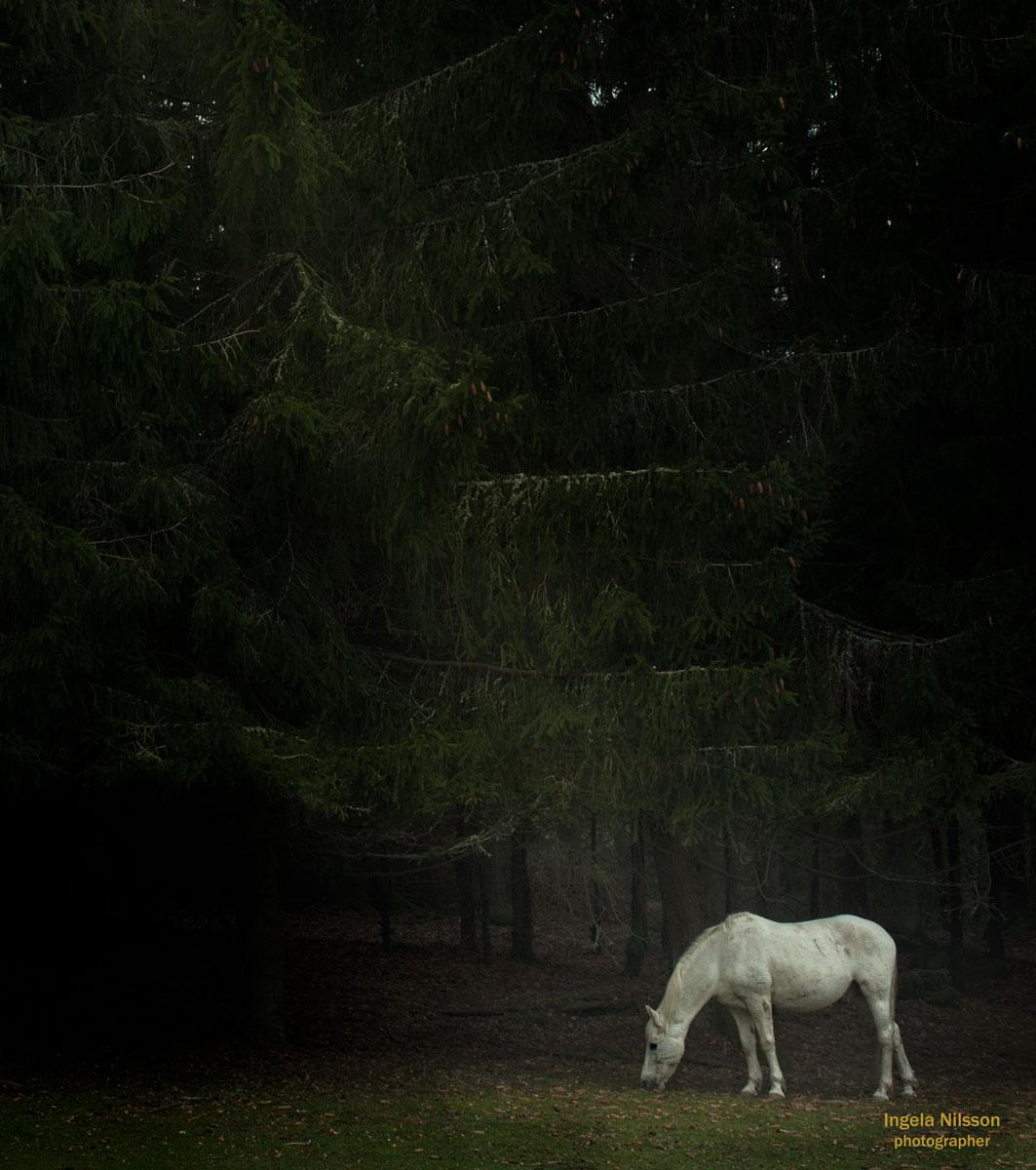 Prinsens häst i sagans värld
